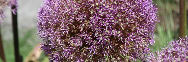 Santa-Fe-Botanical-Gardens